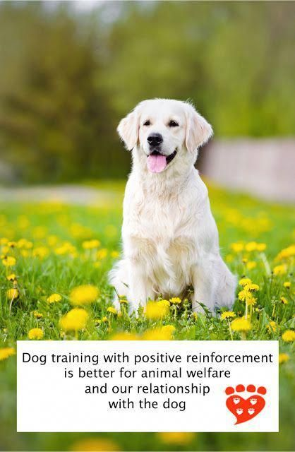 Dog Training Animal Welfare And The Human Canine Relationship