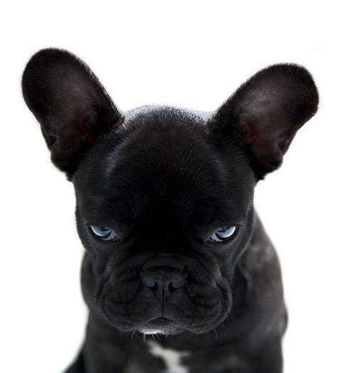 Pin Von Julia F Auf Dog Babyhunde Ausgestopftes Tier Susseste Haustiere