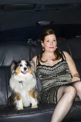 Are Australian Shepherds Good Apartment Dogs Aussie Dogs