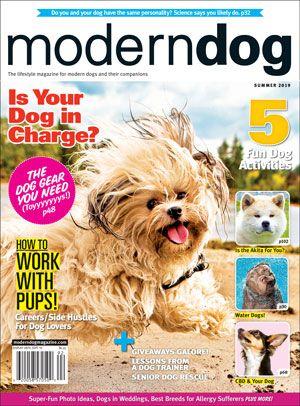 Save 20 On 1yr Subscription Modern Dog Modern Dog Magazine Summer Dog