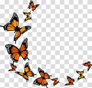 Monarch Butterfly Butterfly Transparent Background Png Clipart In 2020 Butterfly Watercolor Butterfly Background Butterfly Illustration
