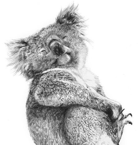A4 Rock Wallaby Joey Australian Wildlife Print Kangaroo Print Australian Animals Dieren Tekenen Dieren Schilderen Dieren