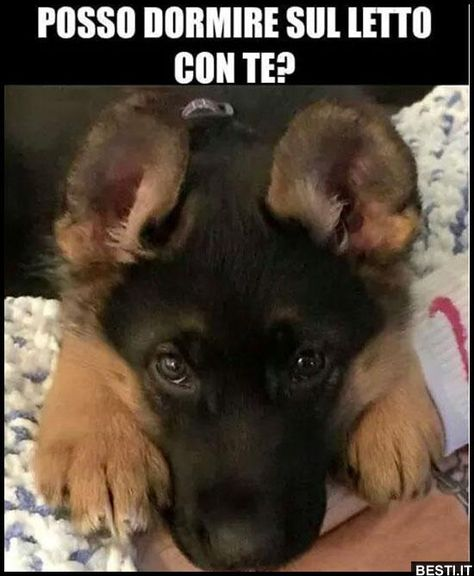 Letto In Tedesco.Posso Dormire Sul Letto Cani Divertenti Simpatici Animaletti E