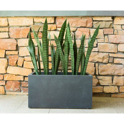 Pin By Olga On Succulents Ideas In 2020 Concrete Planter Boxes Concrete Planters Outdoor Planters