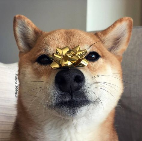 barkpost All I want for Christmas is a...