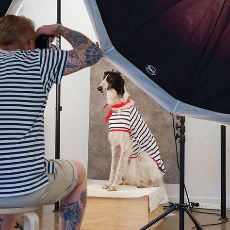 dogphotography BTS @lamingtondrive...