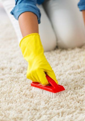 How To Get Mold Out Of Carpet Cleaning Mold Mold Remover How To Clean Carpet