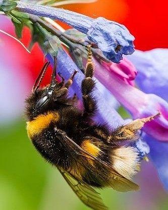 Busy Bee Tiere Tiere Und Vogel Bienen