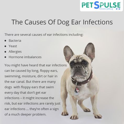 swelling The Causes Of Dog Ear...