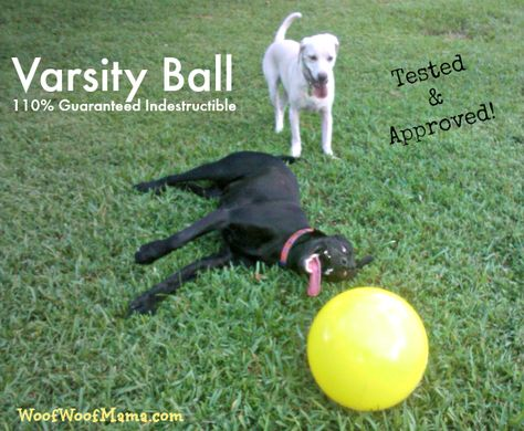 Guaranteed Indestructible Varsity Ball Dog Toy Daisy Tested