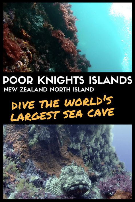 The Poor Knights Islands Dive The World S Largest Sea Cave In Nz Sea Cave New Zealand Travel New Zealand Itinerary