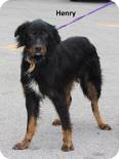 Pin By Teresa Harbin On Tennessee Adoptables Pets Australian
