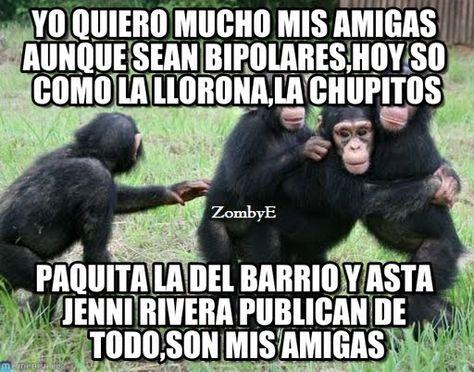 Imágenes De Monos Con Frases Chistosas Divertidas Graciosas Risas Para Compartir Y Descargar Por Celula Memes Chistosisimos Memes De Monos Memes Divertidos