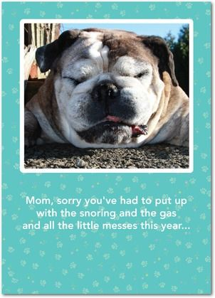 Paws For Thought - Mother's Day Greeting Cards - Hallmark - Teal - Blue : Front