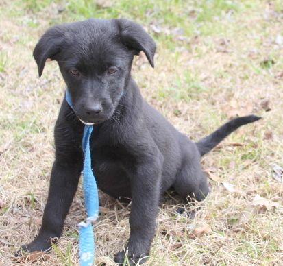 Adopt Heather On Animal Rescue Adoption Dogs