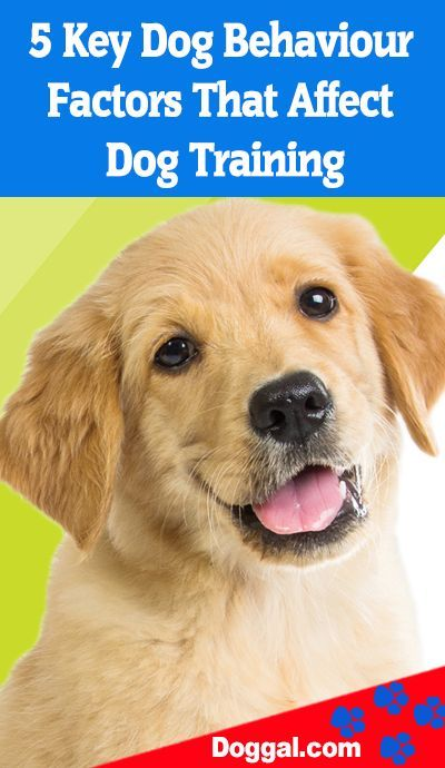 5 Key Dog Behaviour Factors That Affect Dog Training Dog