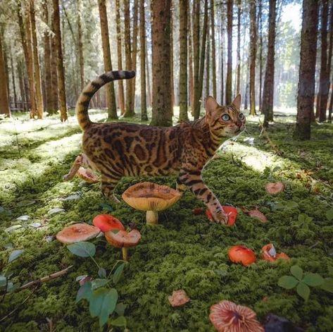 Moon In Aquarius, Adventure Cat, Mushroom Hunting, Hunting Season, Cat Life, Cat Day, Foto E Video, Cats Of Instagram, Cute Cats