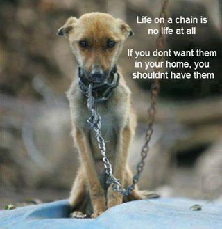 High Quality 277 Best Animal Cruelty 2017 Images On Pinterest | Animal Cruelty, Doggies  And Dogs Good Ideas