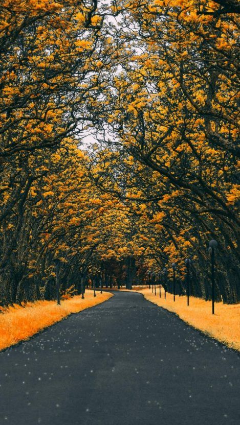 Road Autumn 4k Iphone Wallpaper Iphone Wallpapers In 2020 Hd Phone Wallpapers Android Phone Wallpaper Landscape Wallpaper