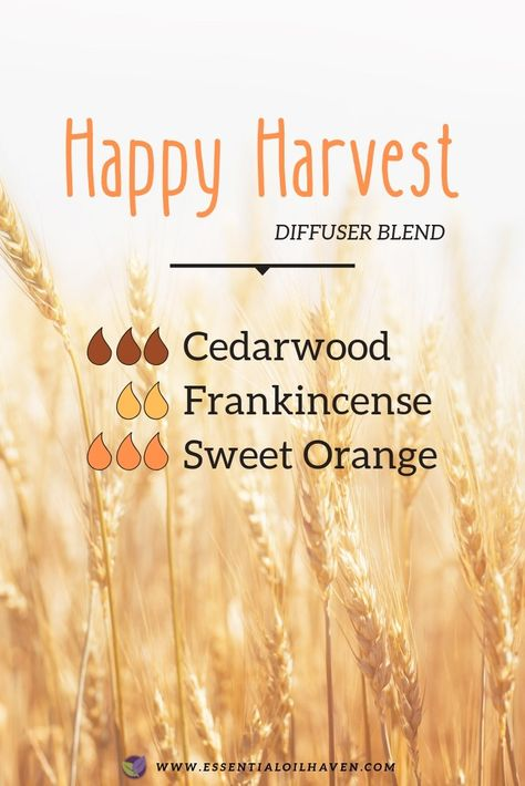 Fall Diffuser Blends - Essential Oil Haven essential oil blends doterra Fall Diffuser Blends Fall Essential Oils, Essential Oil Diffuser Blends, Cedarwood Essential Oil Uses, Sweet Orange Essential Oil, Frankincense Essential Oil, Diffuser Recipes, Aromatherapy Oils, Chakras, Beauty Tips