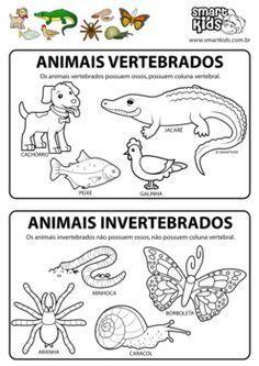 Resultado De Imagen Para Animales Vertebrados E Invertebrados Para