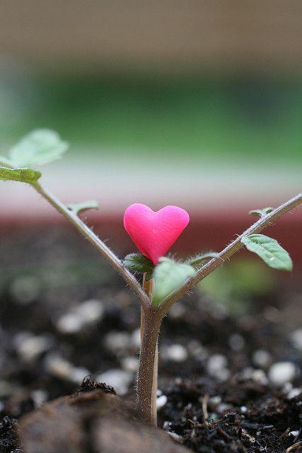 she grew hope & love.
