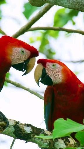 Beautiful Parrots Animals Beautiful Pet Birds Parrot