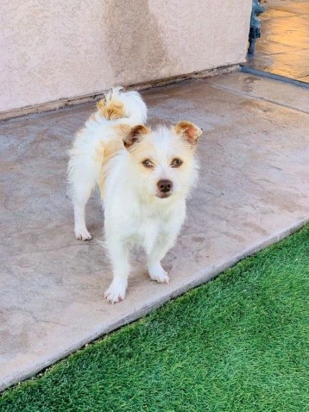 Pin On Jrt Rescues