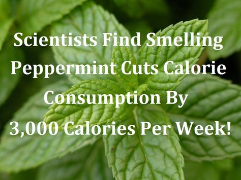 How To Cut 3,000 Calories Per Week With Peppermint