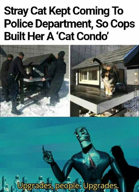 15 Upgrades People Upgrades Memes to Upgrade Your Laughs Really Funny Memes, Stupid Funny Memes, Funny Relatable Memes, Sweet Stories, Cute Stories, Cute Funny Animals, Funny Cute, Hilarious, Satire
