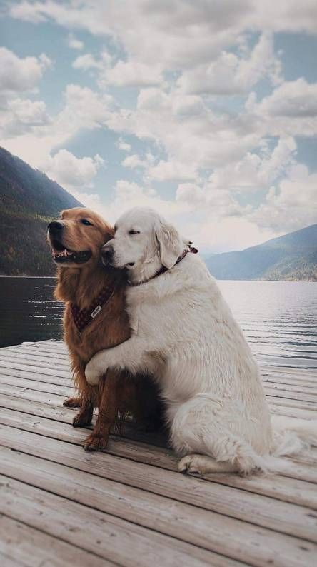 Dogs Wallpapers - Download now the best dogs wallpapers for your mobile
