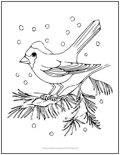 Snow Bird Coloring Page Bird Coloring Pages Coloring Pages Winter Quilts