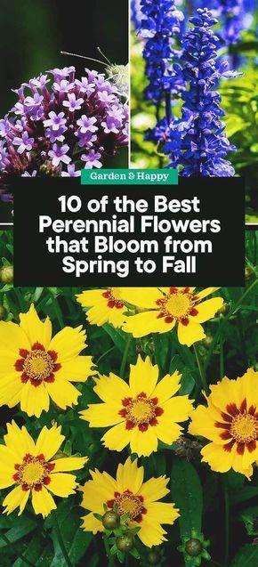 10 Of The Best Perennial Flowers That Bloom From Spring To Fall Garden And Hap In 2020 Herbstgarten Mehrjahrige Blumen Staudengarten