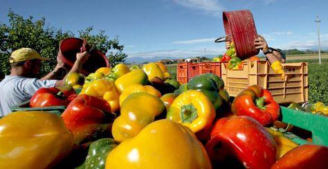 Questi 12 tarantini lavorano per garantire il ritorno ad uno stile di vita più sano, al consumo di frutta e verdura naturale, a Km 0 e di stagione