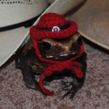 Tiny Pet Halloween Costume Western Cowboy Hat for Frogs, Toads, Guinea Pigs, Lizards, Hamsters Rats and other Little Critters Pet Halloween Costumes, Pet Costumes, Witch Costumes, Halloween Halloween, Vintage Halloween, Halloween Makeup, Costume Ideas, Baby Animals, Funny Animals