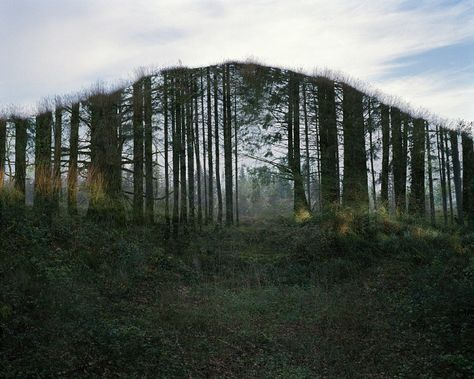 A grove of trees from a point of view - Juan Millás - NOPHOTO ...