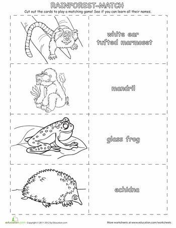 Rainforest Memory Game Worksheet Education Com Rainforest Animals Rainforest Rainforest Theme Rainforest worksheets for kindergarten