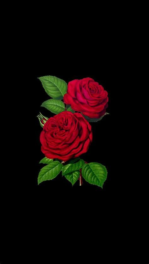 Image Result For Rose Aesthetic Wallpaper Iphone Roses Wallpaper Iphone Love Flower Wallpaper