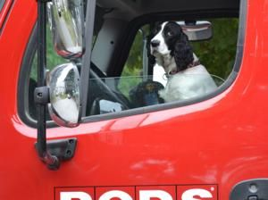 Planning A Cross Country Move With Your Pet Tips To Make The