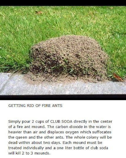 Going To Try This Today Found 2 Mounds In My Yard Best Pest