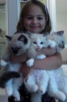 Dreaming About Cats And Kittens Meaning Rescue Cats And Kittens Brisbane Pretty Cats Beautiful Cats Kittens Cutest