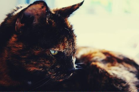 Cats To Adopt Nyc Cancatseatbread Cats Cat Care Cat Breeds