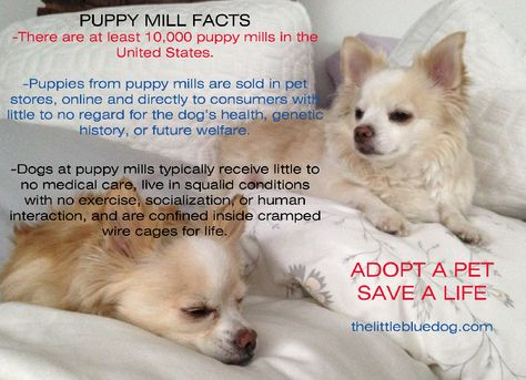 Please Don T Buy Dogs On Line Or In Pet Stores So Many Breeder Dogs Are Suffering Horrible Lives In Puppy Mills To Churn Out Litte With Images Dogs Dog Health Pet Store