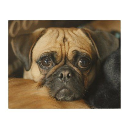 Adorable Pug Portrait Wood Wall Decor Dog Puppy Dogs Doggy Pup