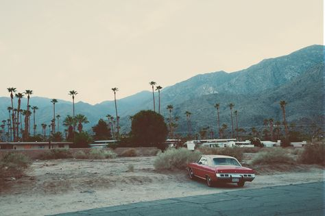 Buy a ticket, palm Springs! — iloveyouwildfox