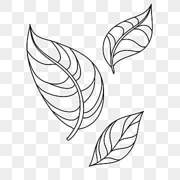 Line Drawing Tea Leaves Line Drawing Tea Culture Tea Ceremony Png Transparent Clipart Image And Psd File For Free Download Line Drawing Line Art Drawings Plant Drawing