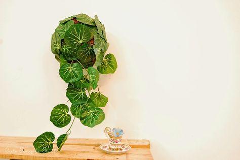 CUTE SIMPLE STUFF: DIY Falling Plant Home Décor