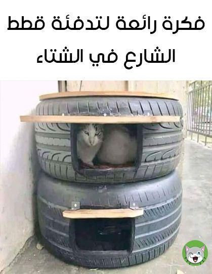 فكرة رائعة لتدفئة قطط الشارع 3 Cat House Cats Animal Rescue