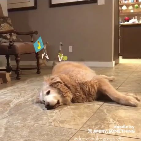 Ducky Mcducky The Dog Conquerer Funny Dog Videos Funny Animal Videos Funny Animal Jokes