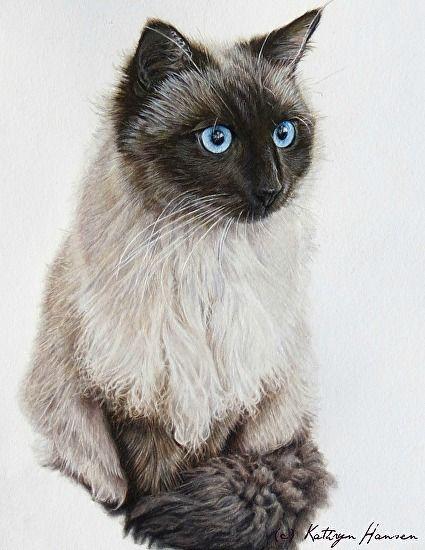 Cole By Kathryn Hansen Colored Pencil 10 X 8 Custom Pet Portraits Kitten Art Pet Portraits